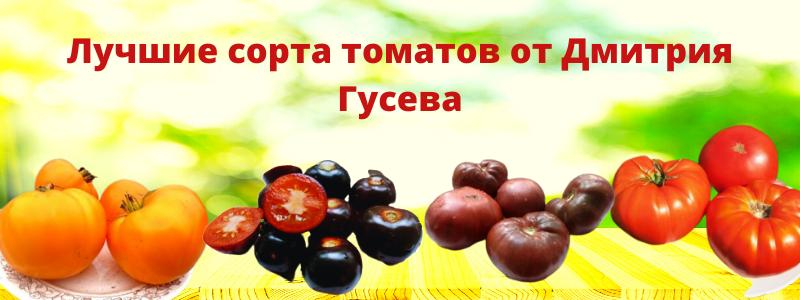 Семена томатов Гусева!! Экзотика и проверенные сорта